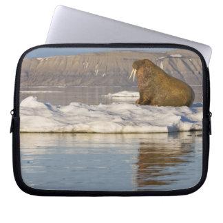 Norway, Svalbard, Edgeoya Island, Walrus Laptop Sleeve
