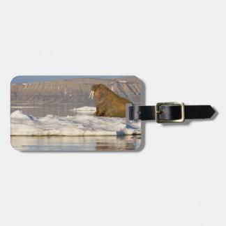 Norway, Svalbard, Edgeoya Island, Walrus Luggage Tag