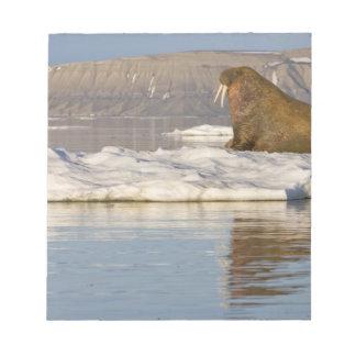 Norway, Svalbard, Edgeoya Island, Walrus Notepad