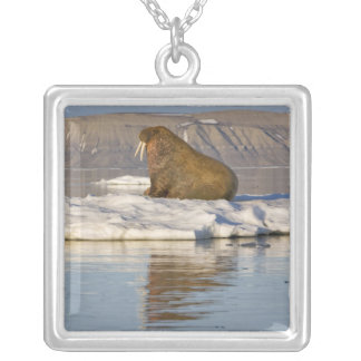 Norway, Svalbard, Edgeoya Island, Walrus Silver Plated Necklace