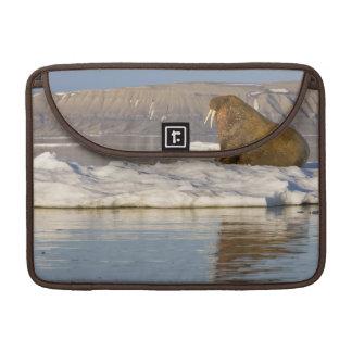 Norway, Svalbard, Edgeoya Island, Walrus Sleeves For MacBook Pro
