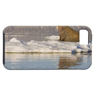 Norway, Svalbard, Edgeoya Island, Walrus Tough iPhone 5 Case
