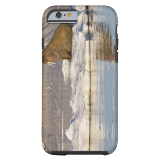 Norway, Svalbard, Edgeoya Island, Walrus Tough iPhone 6 Case