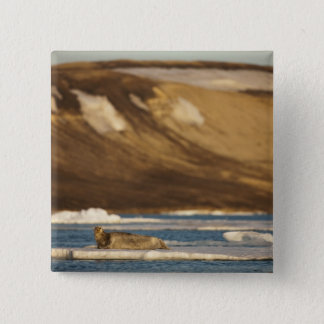Norway, Svalbard, Spitsbergen Island, Bearded 15 Cm Square Badge