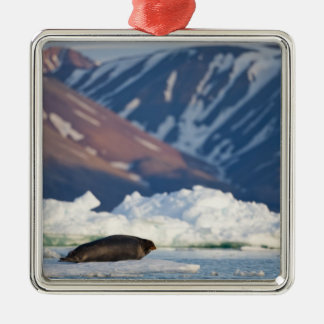 Norway, Svalbard, Spitsbergen Island, Bearded 2 Silver-Colored Square Decoration