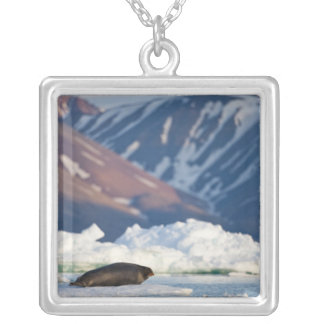 Norway, Svalbard, Spitsbergen Island, Bearded 2 Silver Plated Necklace