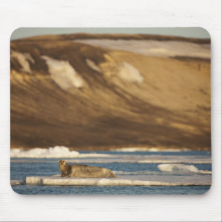Norway, Svalbard, Spitsbergen Island, Bearded Mouse Mat