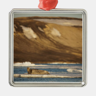 Norway, Svalbard, Spitsbergen Island, Bearded Silver-Colored Square Decoration