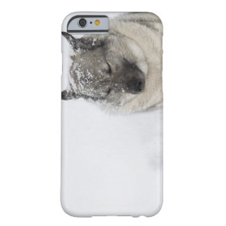 Norwegian Elkhound Barely There iPhone 6 Case