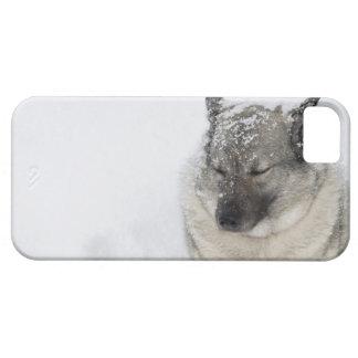 Norwegian Elkhound iPhone 5 Cases