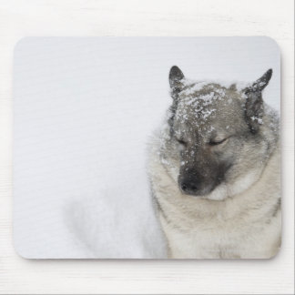 Norwegian Elkhound Mouse Pad
