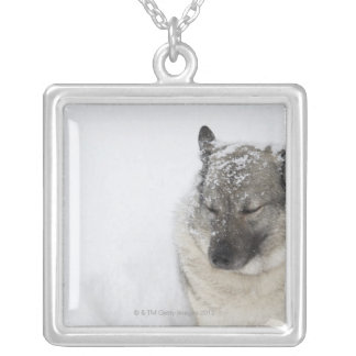 Norwegian Elkhound Silver Plated Necklace
