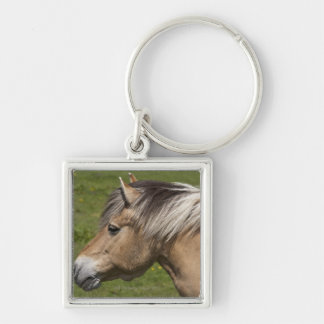 Norwegian Fjord Horse Silver-Colored Square Key Ring