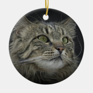 Norwegian Forest cat portrait Christmas Ornament