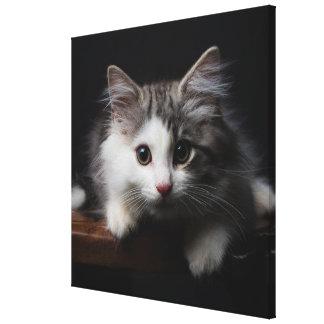 Norwegian Forest Kitten Canvas Print