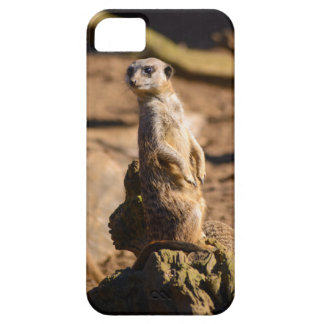 nosey meerkat barely there iPhone 5 case