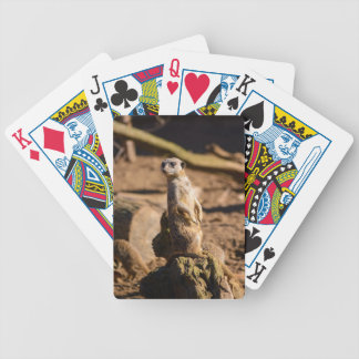 nosey meerkat bicycle playing cards