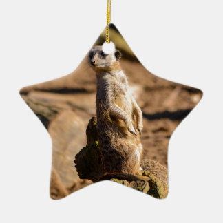 nosey meerkat ceramic star decoration