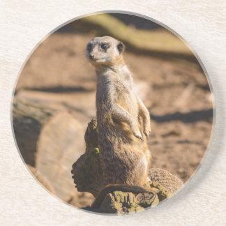 nosey meerkat coaster