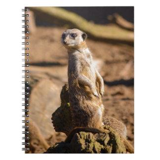 nosey meerkat notebooks