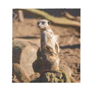 nosey meerkat notepad