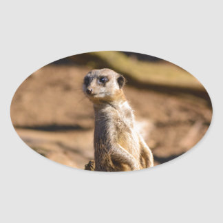 nosey meerkat oval sticker