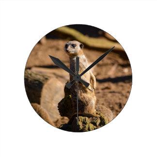 nosey meerkat round clock