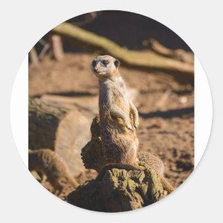 nosey meerkat round sticker