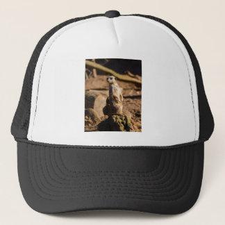 nosey meerkat trucker hat