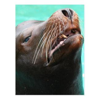 Nosey Sea Lion Postcard