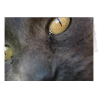 Nosy Cat Birthday Greeting Card