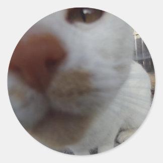 nosy cat sticker