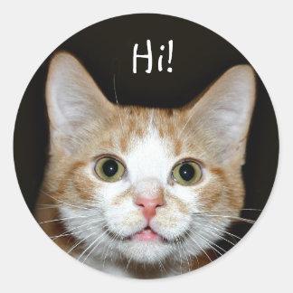 Nosy cat round sticker
