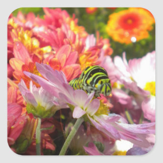 Nosy Caterpillar Stickers