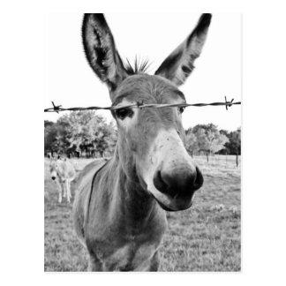 Nosy Donkey Post Cards