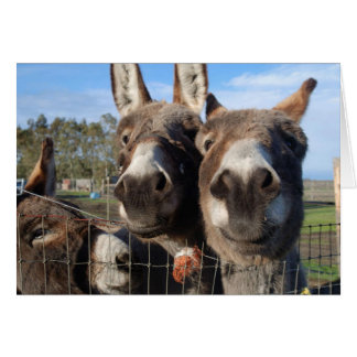 Nosy Donks Greeting Card