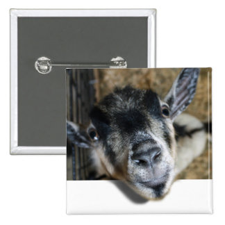 Nosy Goat Looking Out 15 Cm Square Badge