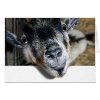 Nosy Goat Looking Out Greeting Card