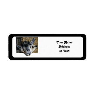 Nosy Goat Looking Out Return Address Label