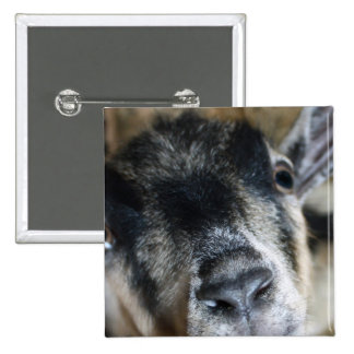 Nosy Goat Looking Up 15 Cm Square Badge