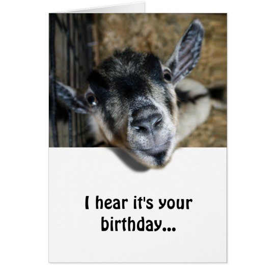 Nosy Goat Looking Up - Birthday Card