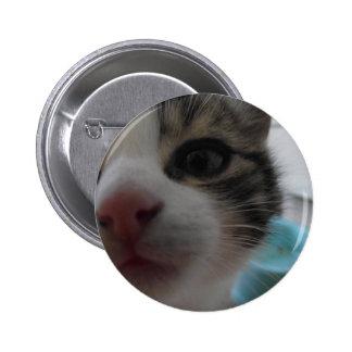 Nosy Kitten Badge
