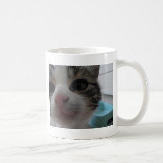 Nosy Kitten Basic White Mug