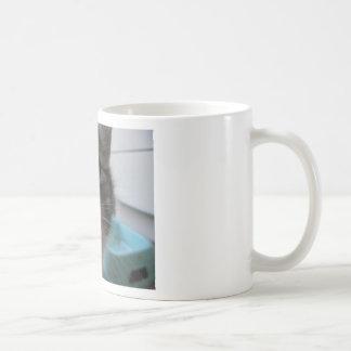 Nosy Kitten Mug