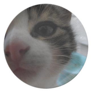 Nosy Kitten Party Plates