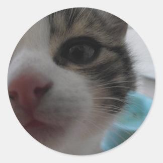 Nosy Kitten Round Sticker