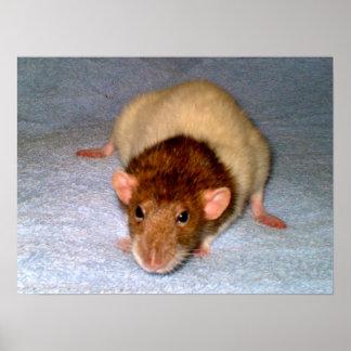 Nosy Rat Print