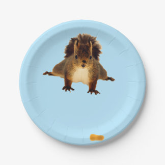 Nosy red squirrel in snow paper plate