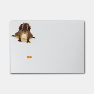 Nosy red squirrel in snow post-it® notes