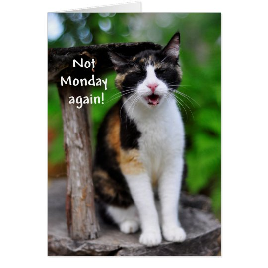 """""""Not Monday Again!"""" Humourous Calico Cat Card"""